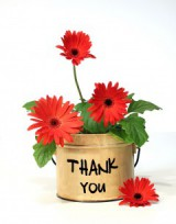 Thank you imprinted on a pot of daisies
